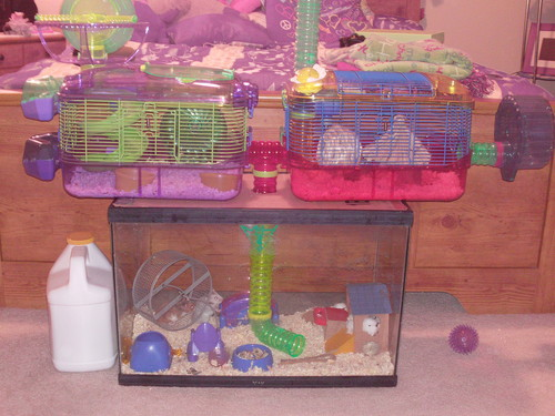 dwarf hamster care, cage and accessories