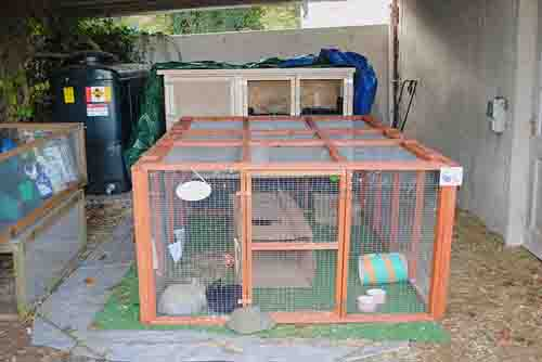 rabbit cage hutch and run