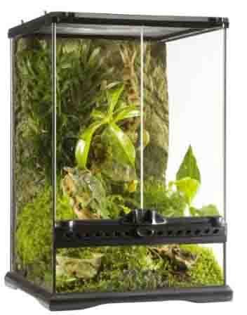 acquarium for lizards