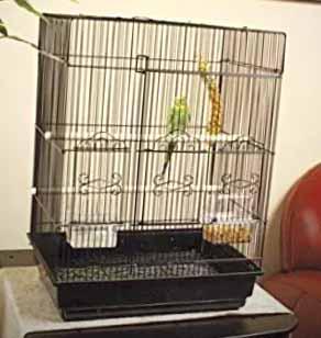 designer parakeet cage