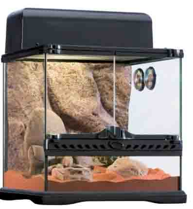 gecko terrarium desert