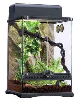 gecko terrarium