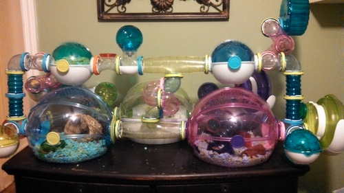 hamster tubes and cage