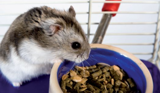 hamster feeding bowl