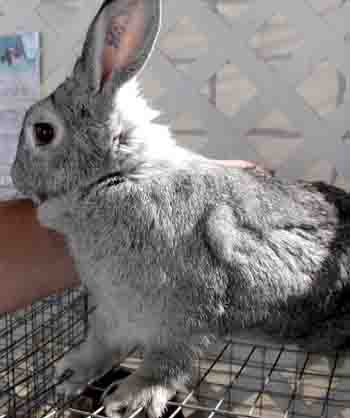 rabbit health problems and diseases guide
