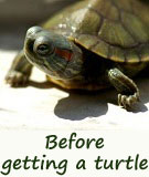 Are pet turtles perfect pets for you?
