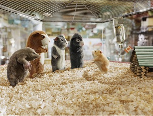 G force in pet shop