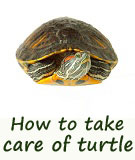 care of pet turtles