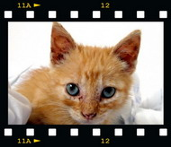 Kitten as pet