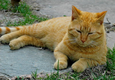 Cat Urine Removal
