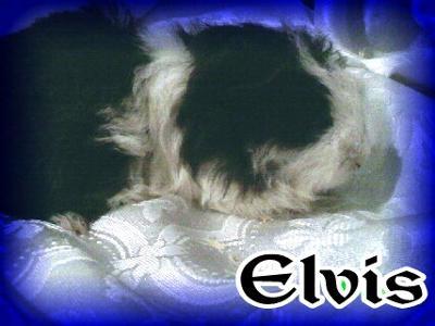 Elvis...the Christmas Adoption