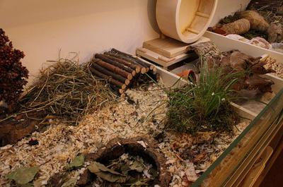 This is a part of a perfect Hamstercage with a deep bedding and alot of natural equipment