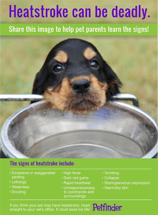 heat stroke pet finder