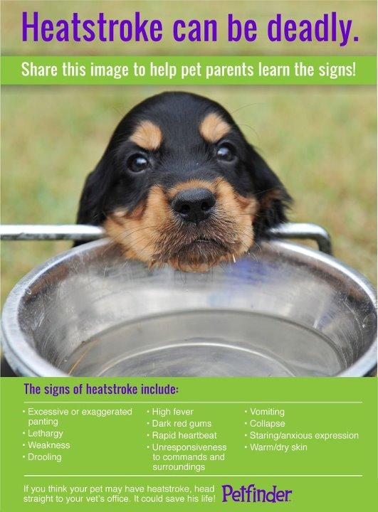 heat stroke pet finder