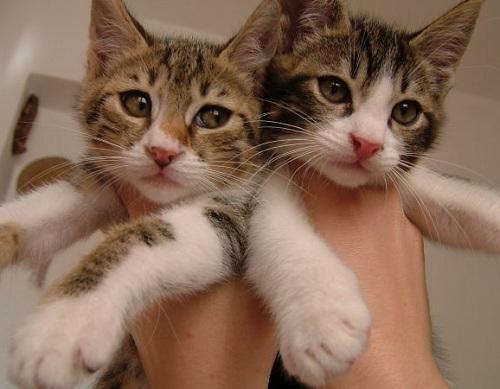Adopt A Male Cat