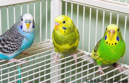 Parakeet cage size