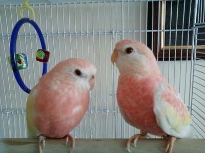 My 2 Beautiful Birds