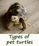 types of pet turtles