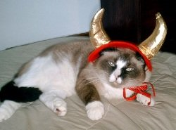 small pet costumes devil cat