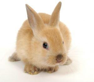 cute looking little bunny