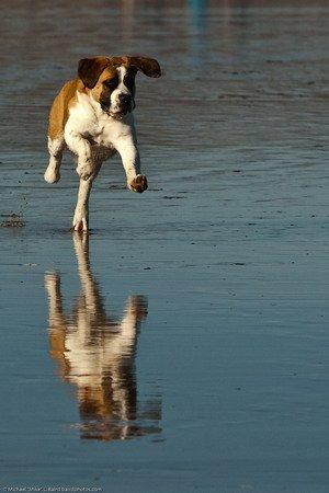 dog heat stroke beach