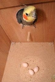 Caja nido para periquitos