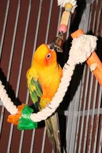 parakeet toys