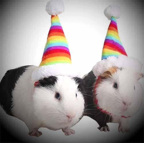 guinea pig costumes