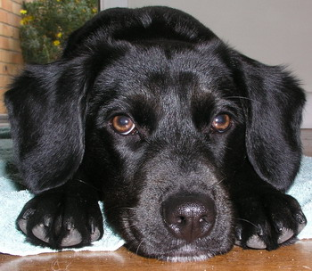 Cute sad puppy