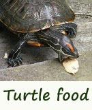 turtle food