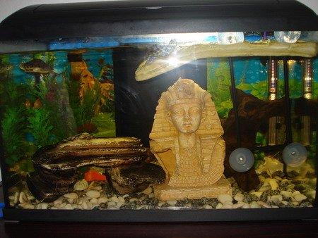 turtle tanks setup