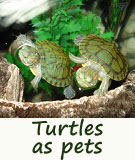 turtles as pets